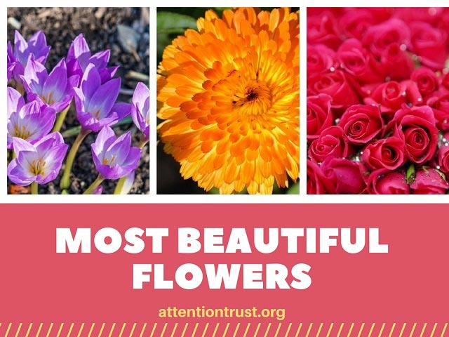 Most Beautiful Flowers in the World - Top Flowers List 2018