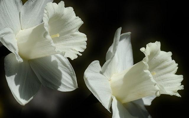top beautiful flowers