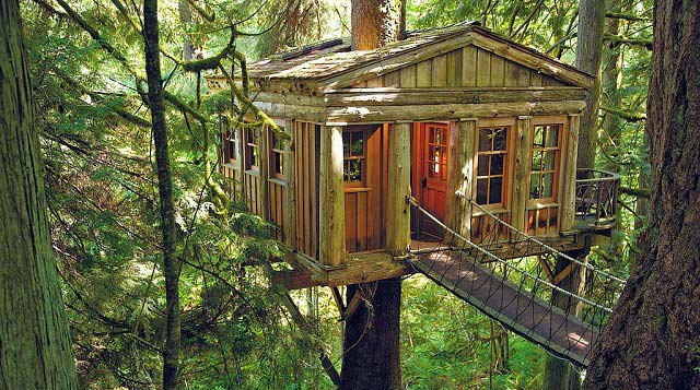 Deep Forest Tree House