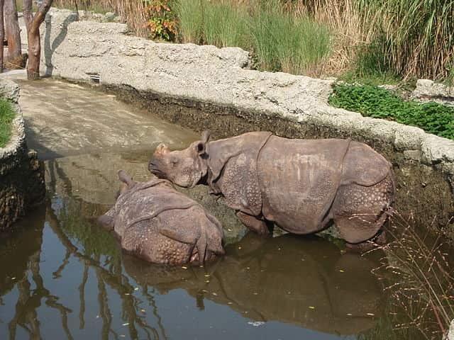 Basel Zoo, Switzerland - best zoo in the world