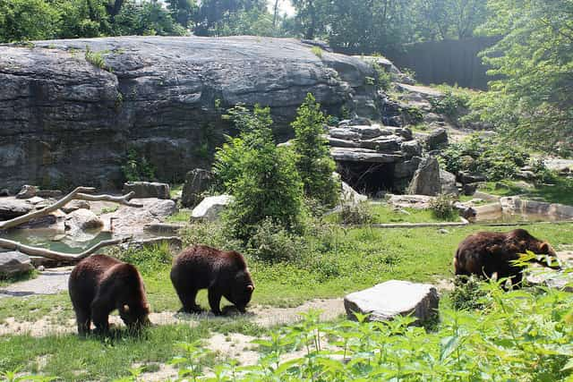 Bronx Zoo - largest zoo in the world