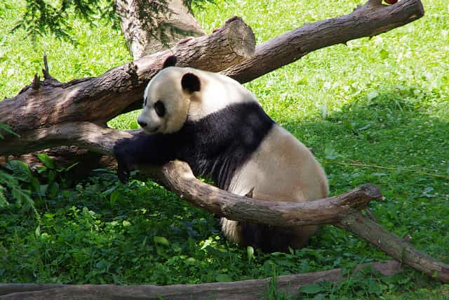 NATIONAL ZOOLOGICAL PARK - best zoo in the world