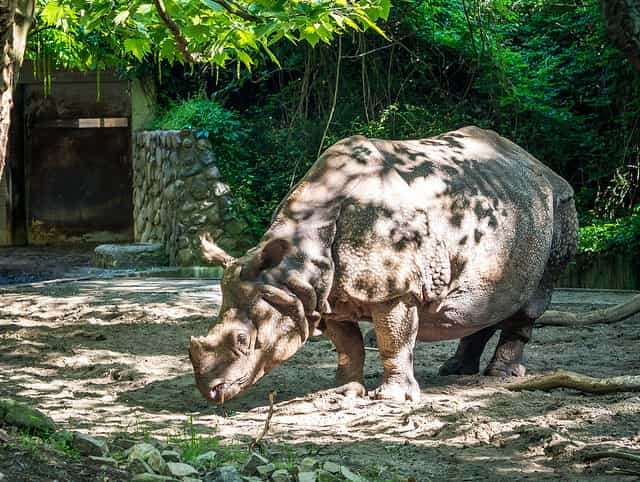 The Berlin Zoo - most popular zoos in the world