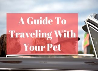Traveling With Pet