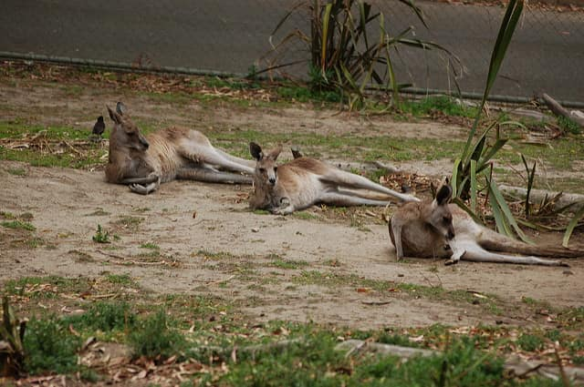 Wellington Zoo - best zoo in the world