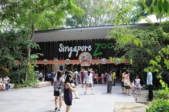 the Singapore Zoo - most popular zoos in the world