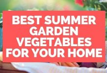 Summer Garden Vegetables