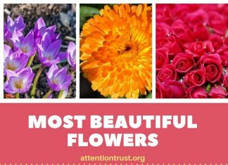 Most Beautiful Flowers