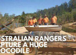Australian Rangers