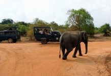 Yala National Park - srilanka destinations