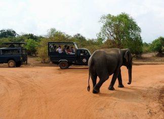 Yala National Park - srilanka destinations