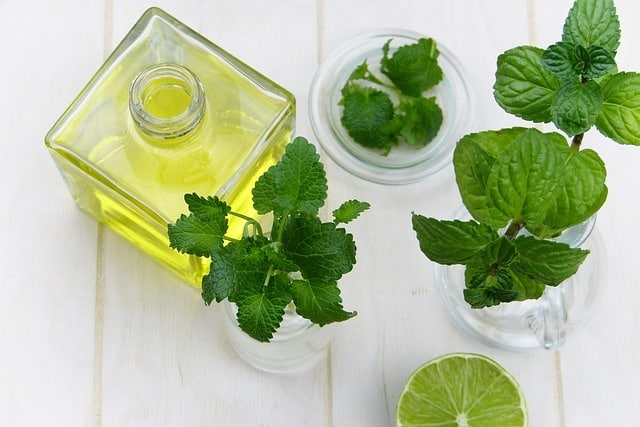 Mint - foods cause acid reflux