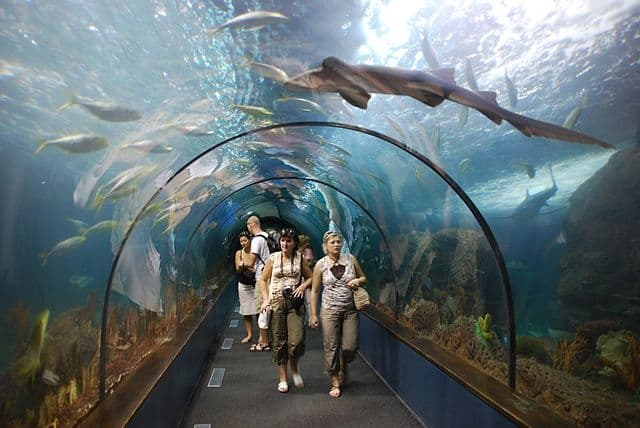 Loro Parque - most popular zoos in the world