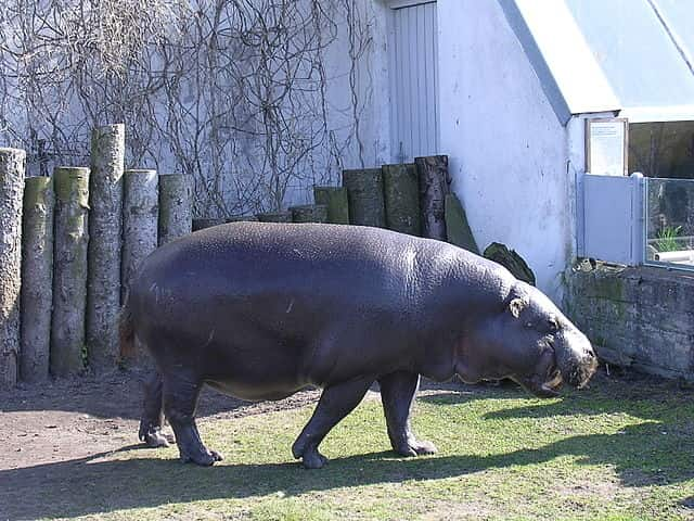 TALLINN ZOO - most popular zoos in the world