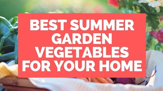 Summer Garden Vegetables