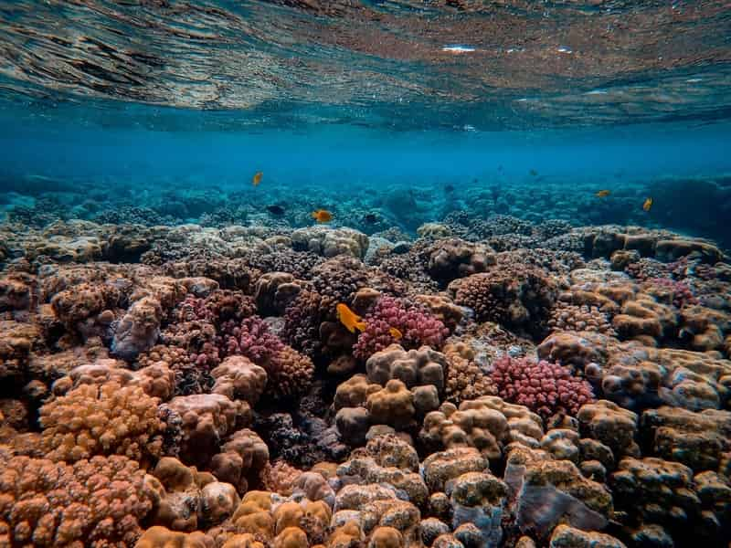 Be prepared to see coral bleaching