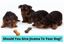 Jicama Dog Food