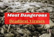 Deadliest Viruses