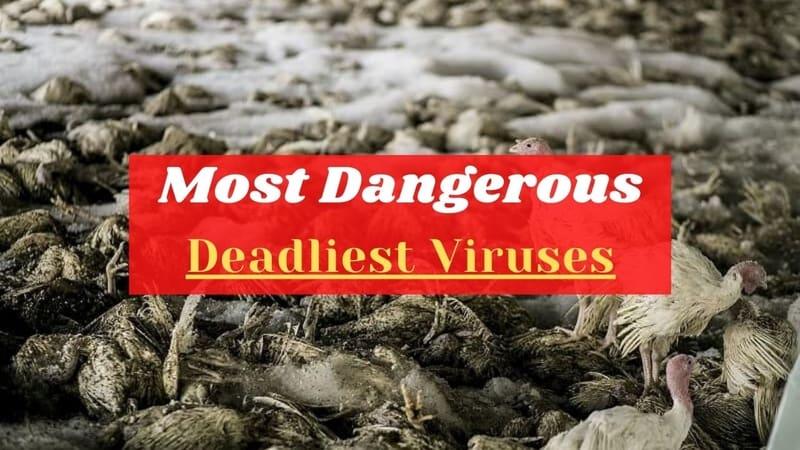 Deadliest Viruses