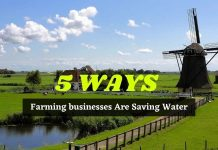 5 Ways Farming businesses Are Saving Water