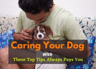 Caring Your Dog with These Top Tips Always Pays You