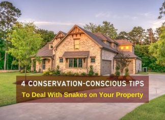 Snakes on Your Property