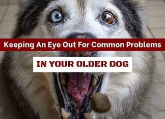 Keeping An Eye Out For Common Problems In Your Older Dog