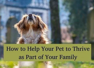 Help Pet to Thrive